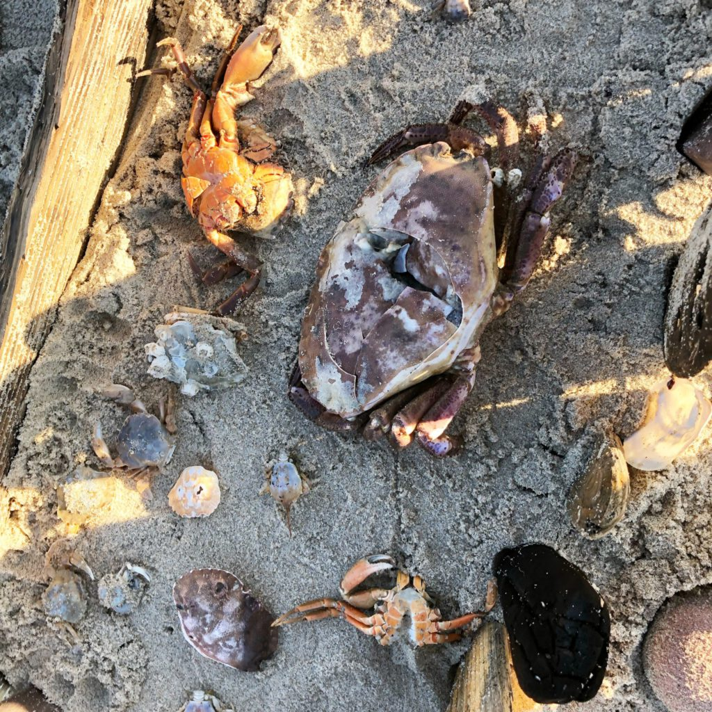 strand vondsten